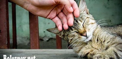 Опасные заболевания, передающиеся от кошек людям