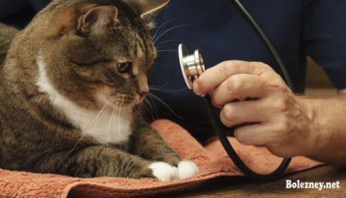 Псевдо заболевания у кошки