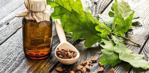 Дубовая кора от поноса: правильноеупотребление и противопоказания