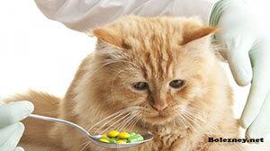 Как давать кошке лекарство от глистов?