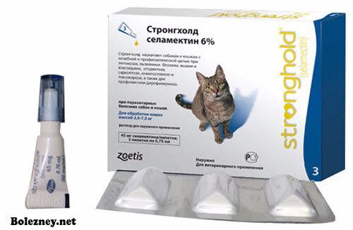 Правила применения капель Стронгхолд для кошек