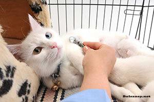 Возможные осложнения после приёма лекарства от глистов у кошек