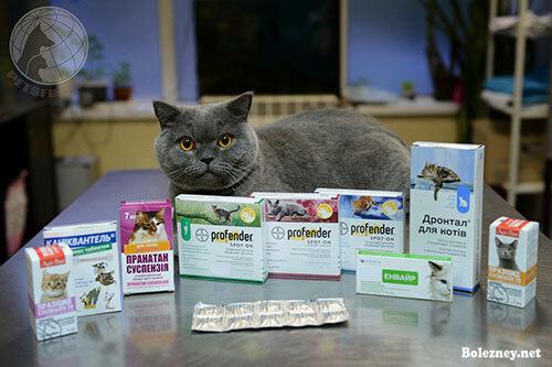 Выведение глистов у кошек: частота и правильность проведения процедуры