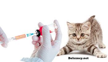Глистогонные средства перед прививко