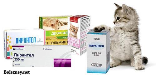 Пирантел для кошек. Инструкция. Дозировка. Применение
