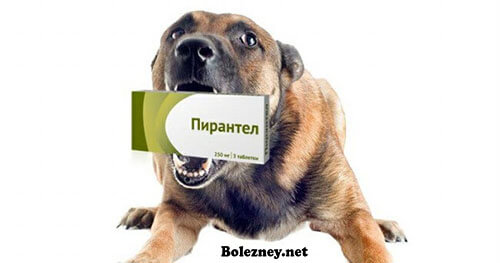 Пирантел для лечения собак от глистов. Инструкция. Аналоги